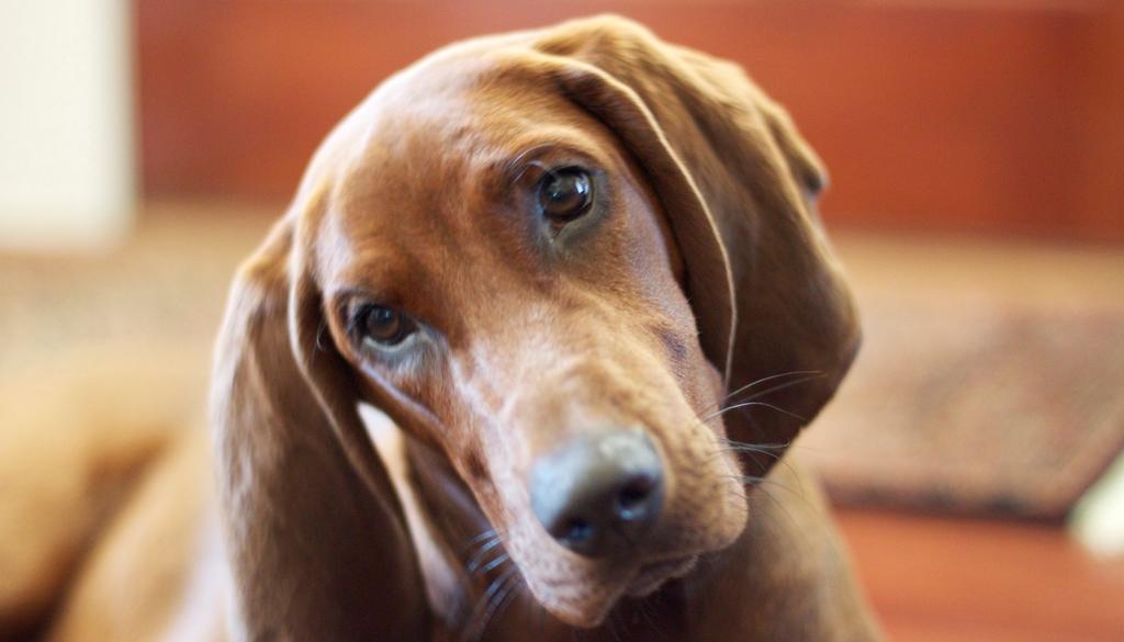 Animais estimação blog unimed vtrp 3