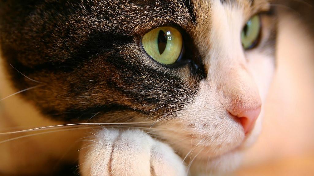 Animais estimação blog unimed vtrp 2