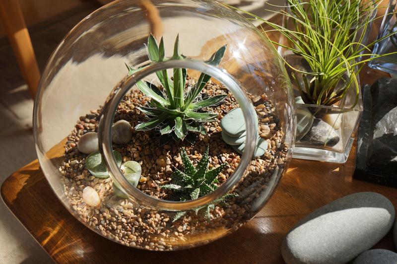 Terrário Plantas Decoração Blog Unimed VTRP 6