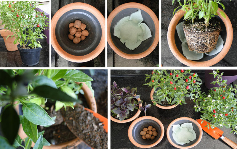 Horta em vaso você pode plantar Blog Unimed VTRP