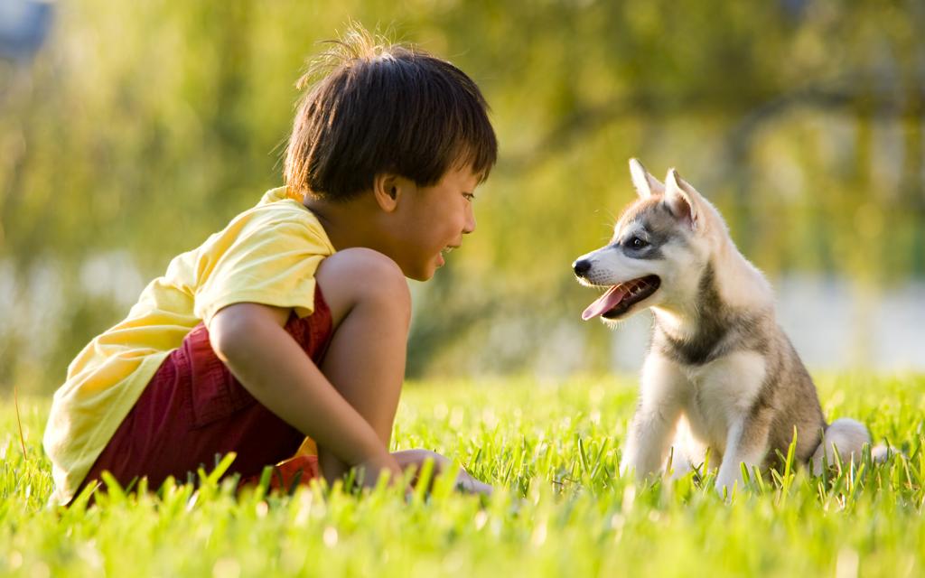 Blog Unimed_Menino e cão