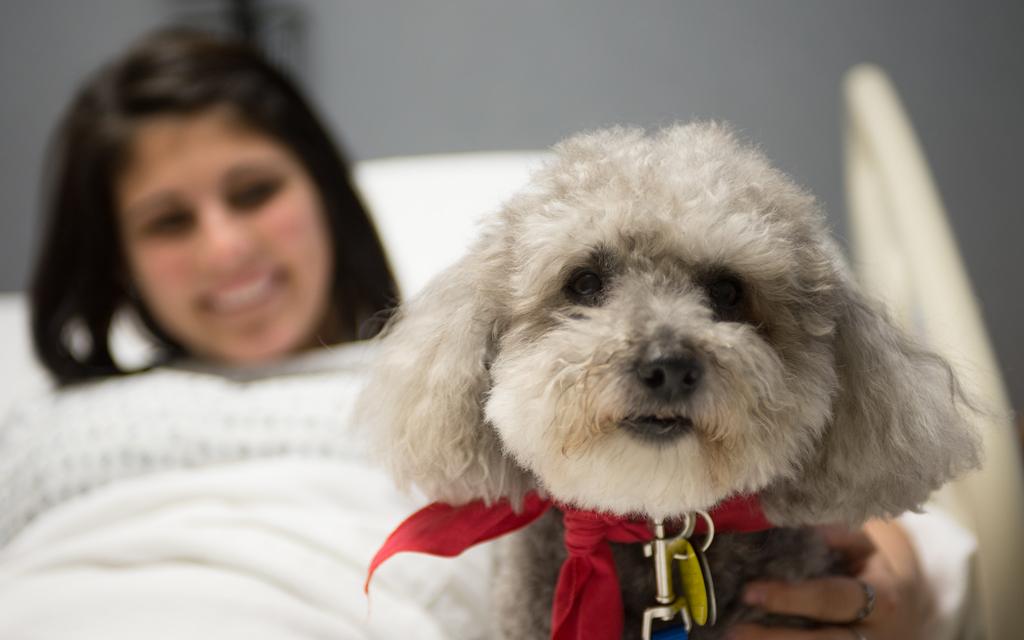 Blog Unimed VTRP Cães auxiliam nos tratamentos
