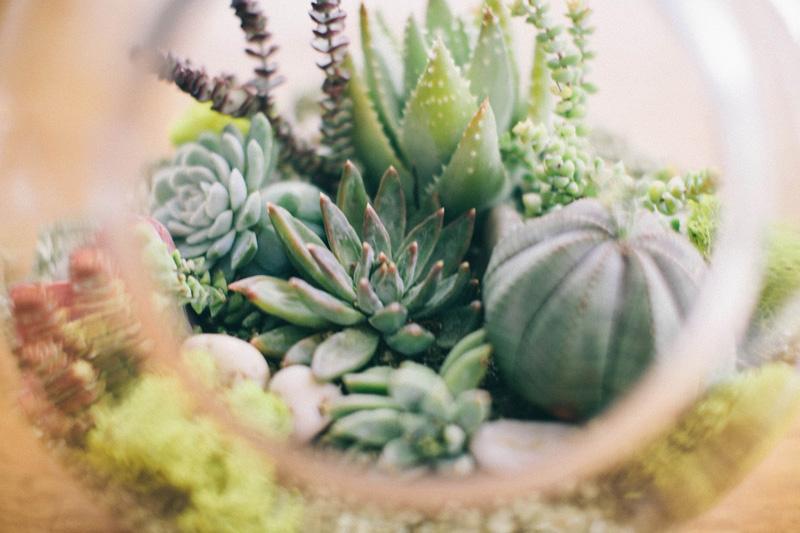 Terrário Plantas Decoração Blog Unimed VTRP 8