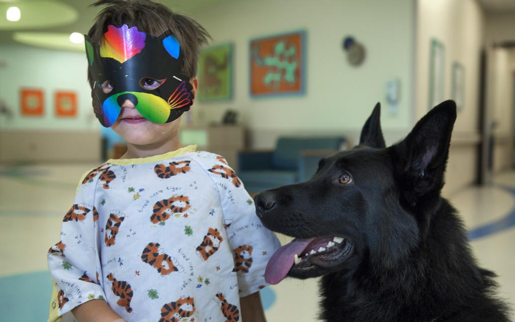 Blog Unimed VTRP Auxilio de animais nos tratamentos